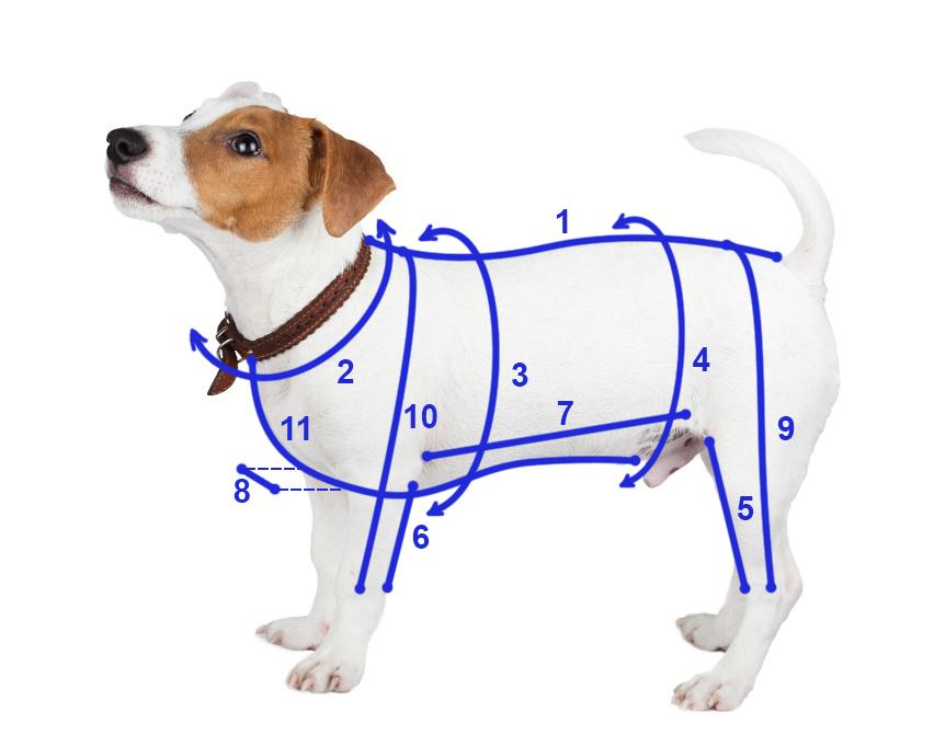 как правильно снять мерки собаки для пошива одежды в интернет магазине одежды для собак